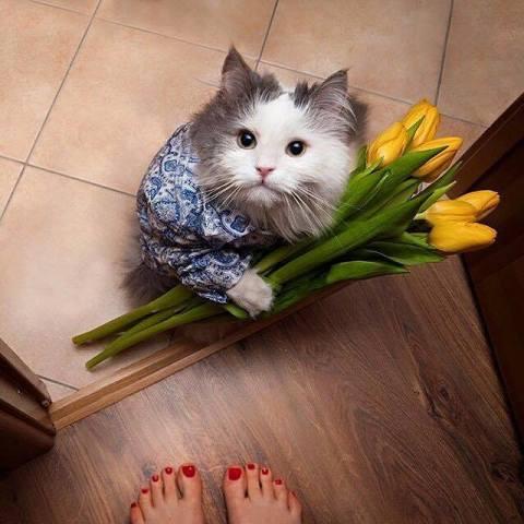 Apologetic Cat (Image via George Takei)