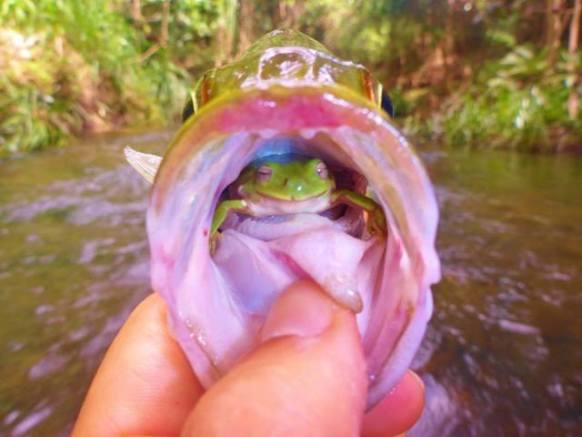 Rescued Frog (Image via IFL Science)