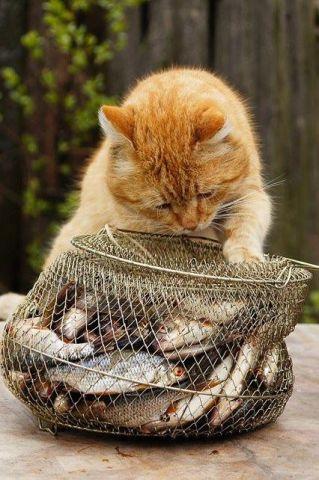Intrigued Cat (Image via MN Gozle)