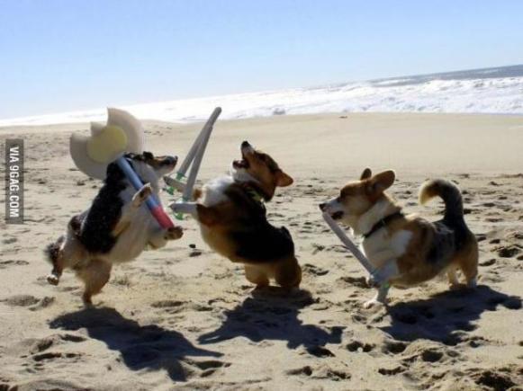 Braveheart Dogs (Image via 9GAG)