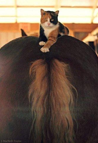 Backside Cat (Image via flickr)