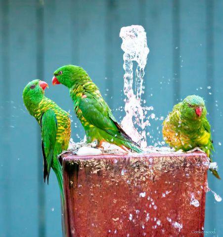 Arguing Birds (Image via tumblr)