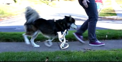 Derby the Dog & His Prosthetic Paws: Prosthetic dog limbs by 3D Systems