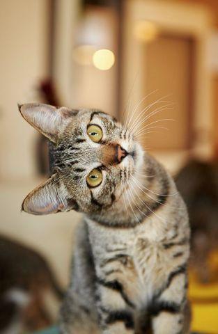 Begging Cat (Image via tumblr)