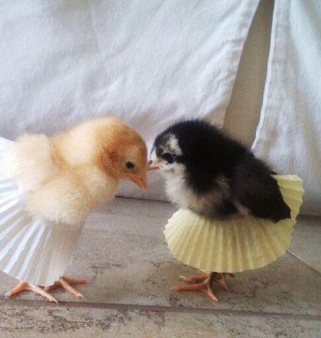 Ballet Chicks (Image via Oh So Lovely)