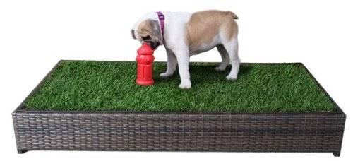 5 Best Indoor Doggy Potty Solutions To, Indoor Dog Bathroom Solutions