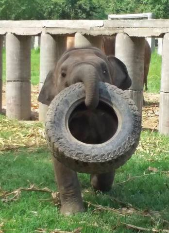 Tired Elephant (Image via Dina Red-Evils)