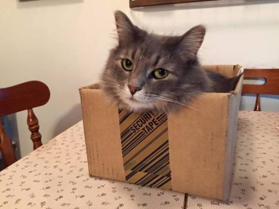 Boxed Cat (Image via Katie Sholty, used by permission)