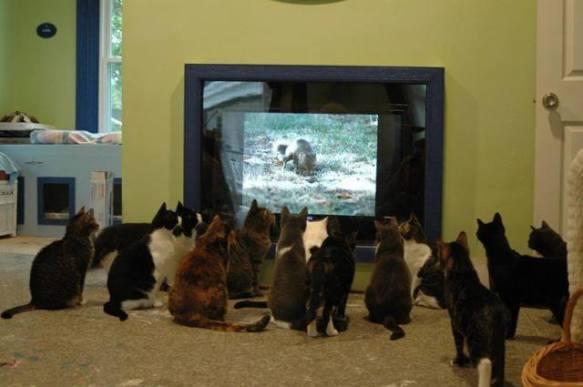 Cat Theater (Image via George Takei)