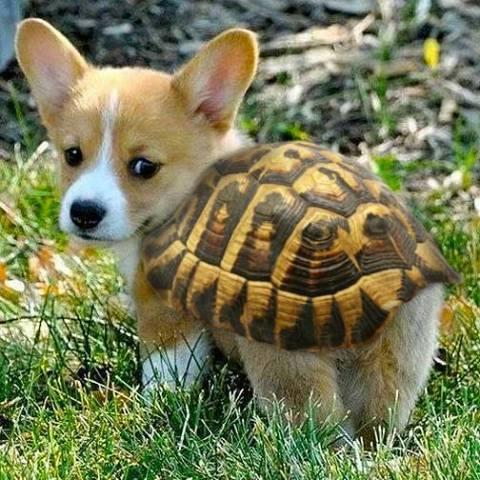 Turtle Pup (Image via IGN.com)