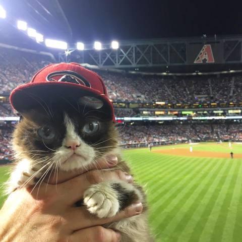 Grumpy Baseball Cat