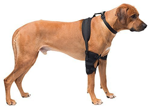 Caldera Pet Therapy Elbow Wrap