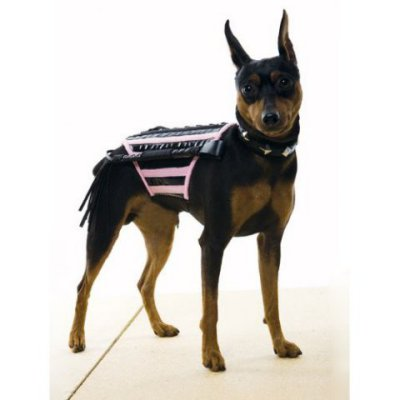 I know you want me to whip you, my little beastie boy.: Dominatrix Dog Costume