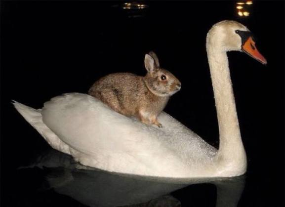 Swan-Riding Bunny (Image via YesPets)