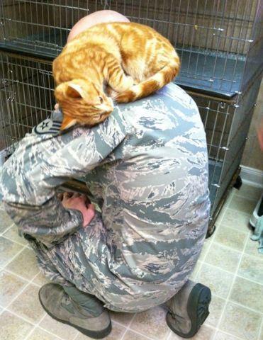 Loving Shelter Cat