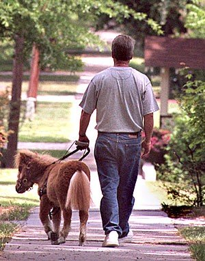 Man led by guide horse: image via buzzle.com