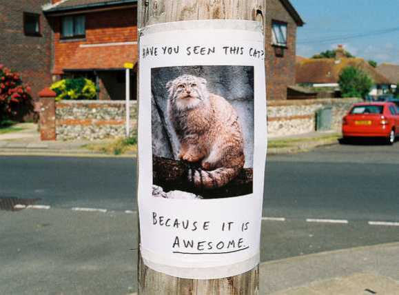 Missing Purrsons The Top Ten Wacky Lost Pet Posters Petsladycom