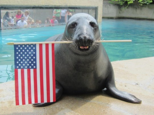 Patriotic Seal (Image via  )