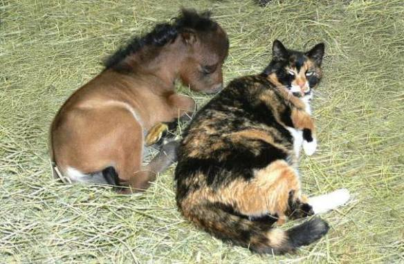 Cat and Mini Horse (Image via The Best of Tumblr)