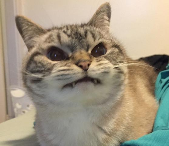 Vampire Cat (Image via The Best of Tumblr)