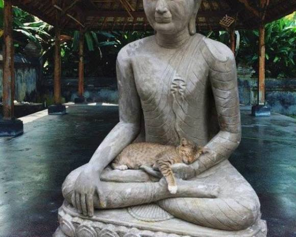 Buddha Cat (Image via Facebook)