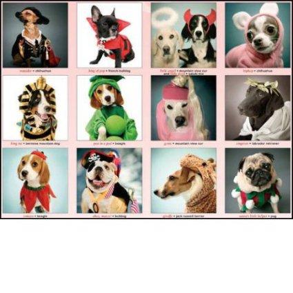 Indognito Canines in Costume 2011 Wall Calendar