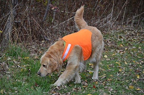 Dog Not Gone No Fly Zone Insect Repellent Vest