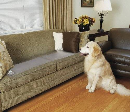 Pets Off Furniture Counters, Best Furniture For Pets