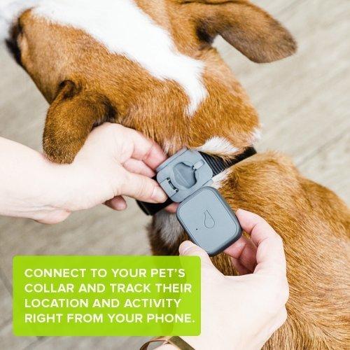 Sifflet GPS pour animaux de compagnie