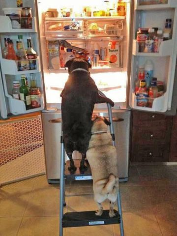 Snooping Dogs (Image via The Stressed Mom)
