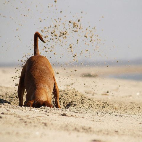Digging Dog (Image via Etsy)