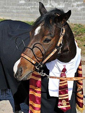 Harry Potter Horse (Image via BuzzFeed)