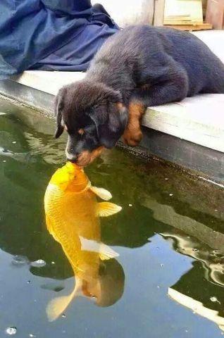 Puppy Kiss (Image via DoggyLoot)