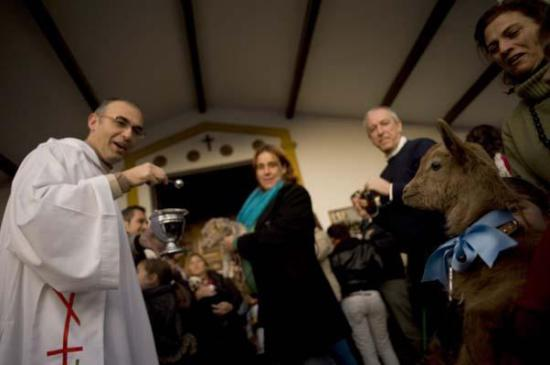 Goat receives blessings in Churriana, Spain: © AFP/Getty Images, photo by Jorge Guerrero