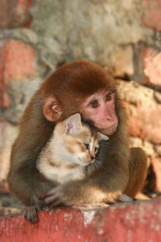 Monkey Hugging a Cat
