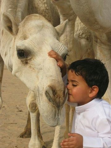 A Camel And His Boy