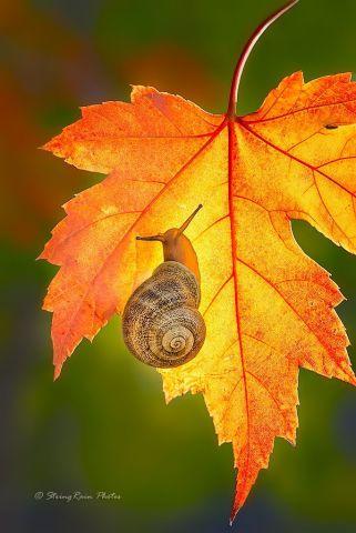 Autumn Snail