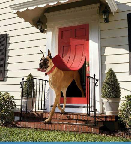 Now THAT'S a doggie door!