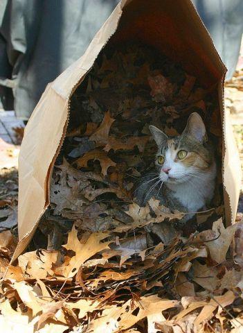 Helpful Cat