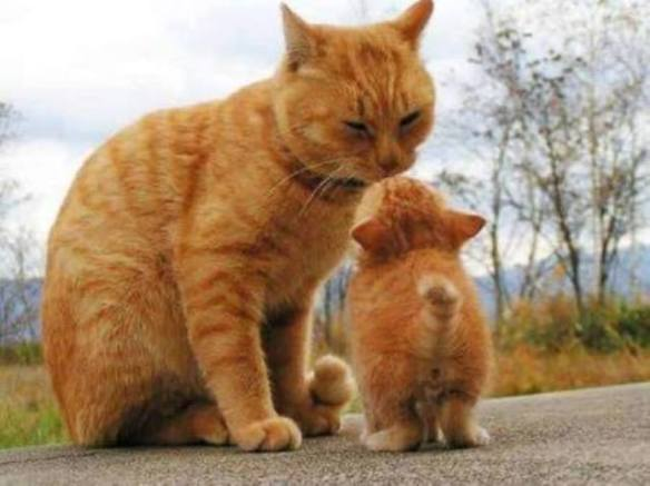 Father and Son Felines