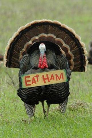 Turkey Message