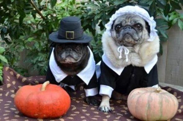 Pilgrim Pugs