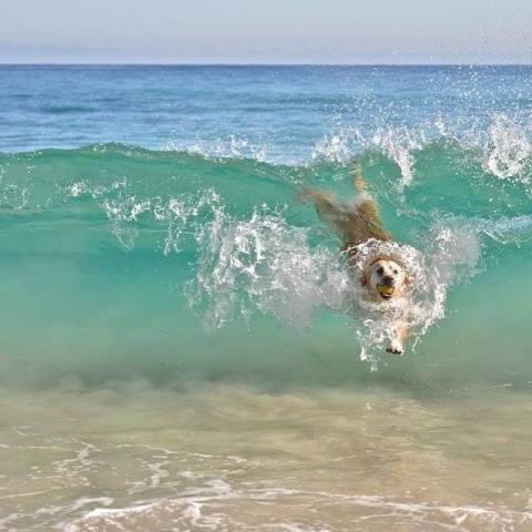 Body Surfing Dog