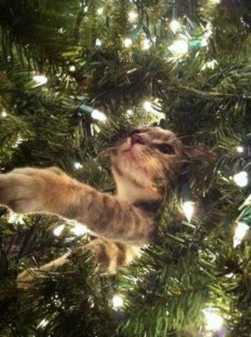 Twinkle Light Cat