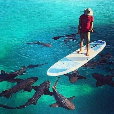 Circling Sharks