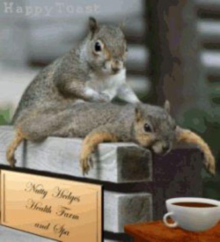Squirrel Massage (Image via websquirrel's lolz)