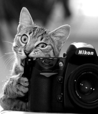 Photographer Cat (Image by The Berry)