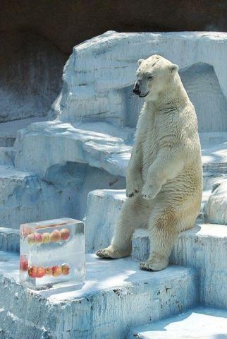 Ice Pop Polar Bear