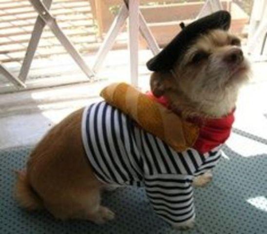 Bastille Day Dog