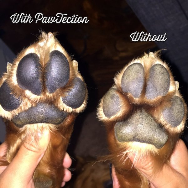 Natural Dog Company Paw Protector - Pawtection